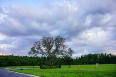 在太阳集合的云彩 免版税库存图片