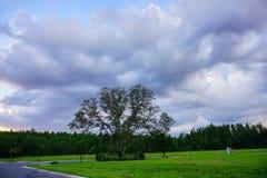 在太阳集合的大树 库存照片