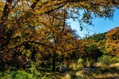 在失去的槭树国家公园的秋叶在得克萨斯 库存照片