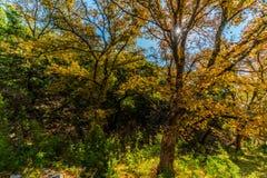 在失去的槭树国家公园的秋叶在得克萨斯 图库摄影