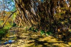 在失去的槭树国家公园的秋叶在得克萨斯 免版税库存照片