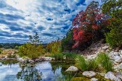醒目的红槭叶子在得克萨斯。 免版税库存照片