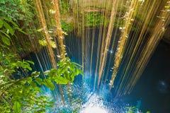 在奇琴伊察附近的Ik-Kil Cenote,墨西哥 免版税库存照片
