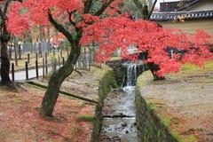 在奈良公园的秋天Laves在奈良 免版税图库摄影