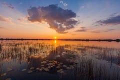 在奥卡万戈三角洲的水的日落 免版税库存图片