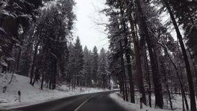 在奥地利森林里飞奔在驾车的凸轮 影视素材