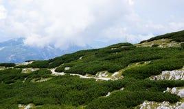 在奥地利的鲜绿色小山的一条蜿蜒的路 库存图片