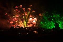 在奥秘黑暗的森林特写镜头的三个幻想发光的蘑菇 不可思议的蘑菇美丽的宏观射击或三灵魂在ava丢失了 免版税库存图片