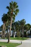 在奥里韦拉肋前缘的高尔夫俱乐部 库存照片