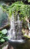 在奥马哈动物园热带密林的瀑布 库存照片