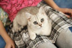 在女孩的膝部II的幼小小猫 免版税图库摄影
