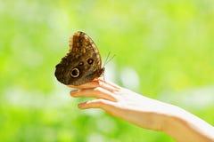 在一只女性手的蝴蝶 库存照片