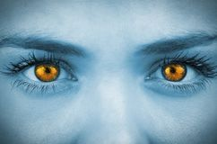 在女性面孔的明亮的橙色眼睛 库存照片