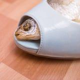 在女性鞋子内的干鱼 免版税库存照片