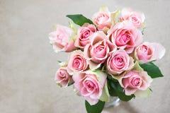 在奶油色背景的桃红色玫瑰 免版税库存照片
