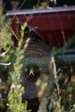 在她的万维网的蜘蛛 免版税库存照片
