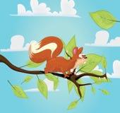 在她的分支的逗人喜爱的红松鼠 库存图片