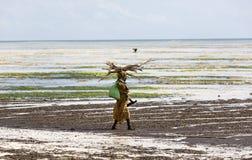 在她的头的妇女运载的木头沿海滩,桑给巴尔 库存图片