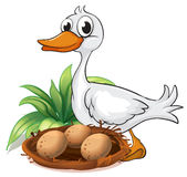 在她的巢旁边的一只鸭子 库存图片