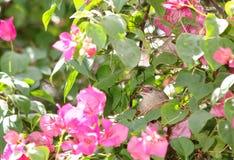 在她的巢的小母浅褐色的可爱,逗人喜爱的鸟 免版税库存图片
