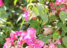 在她的巢的小母浅褐色的可爱,逗人喜爱的鸟 库存图片