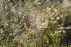 在她的网的蜘蛛 免版税库存照片