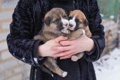 在她的胳膊的小狗 免版税库存照片