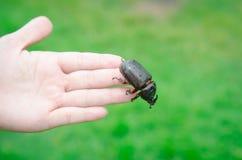 在妇女手上的金龟子甲虫 免版税库存图片