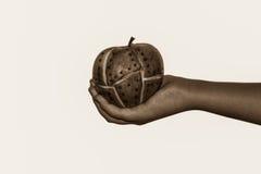 在妇女手上的Steampunk苹果 免版税库存图片