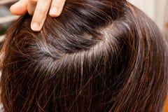 在妇女灰色头发根的特写镜头反对黑发的 库存照片