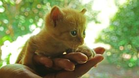 在妇女的手上的小猫为他们的母亲哭泣 股票录像
