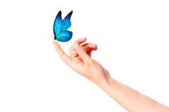 在妇女的手上的蝴蝶。在行动 库存图片