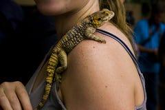 在妇女肩膀关闭的蜥蜴摄影 库存照片