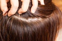 在妇女被洗染的头发根的特写镜头  没有灰色 图库摄影
