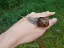 在妇女` s手上的蜗牛 免版税图库摄影