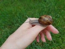 在妇女` s手上的蜗牛 库存照片