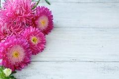 在委员会的美丽的桃红色翠菊 免版税库存照片