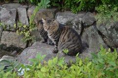 在姬路城的猫 免版税库存图片