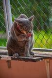 在姿态的猫 库存照片