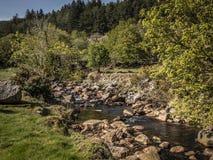 在威克洛山的小小河在爱尔兰 库存照片
