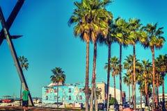 在威尼斯海滩的棕榈树 免版税库存照片