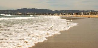 在威尼斯海滩II的海滩寒冷的会议 库存照片