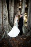 在婚礼之下的夫妇结构树 图库摄影