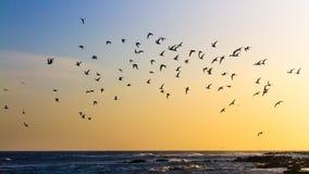 在婴孩海滩,阿鲁巴的飞行 免版税库存图片