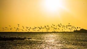 在婴孩海滩,阿鲁巴的飞行 免版税库存照片