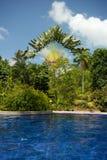 在嫩绿的棕榈旁边的游泳池和其他树和植被 库存图片