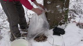 在子口和槭树树干的定象塑料大袋树汁的 影视素材