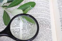 在字典的词和平 免版税图库摄影