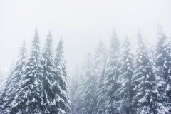 在孚日省山法国的一个冬天风景与多雪的f 库存图片