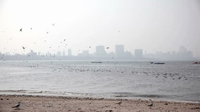 在孟买海滩的海鸥 影视素材